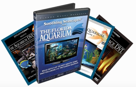 Plasma Candy DVD Bundle