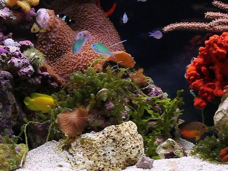 A Dancing Rainbow of Tropical Fish