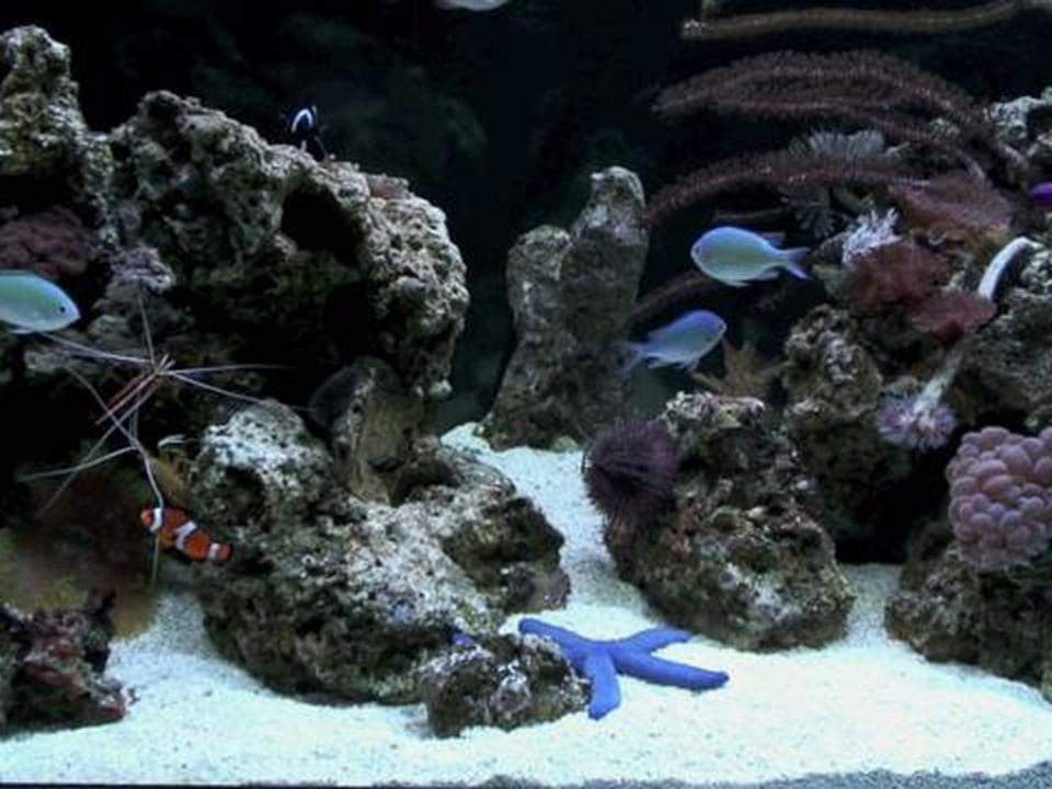 Aquarium DVD Vol. 1 Demo