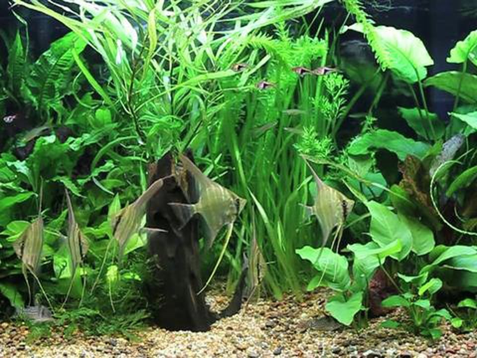 Soothing Green Aquarium Scenes