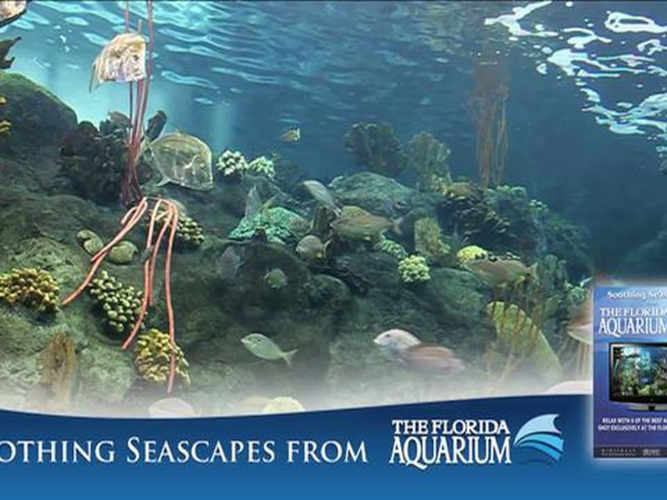 Soothing Seascapes from the Florida Aquarium Trailer