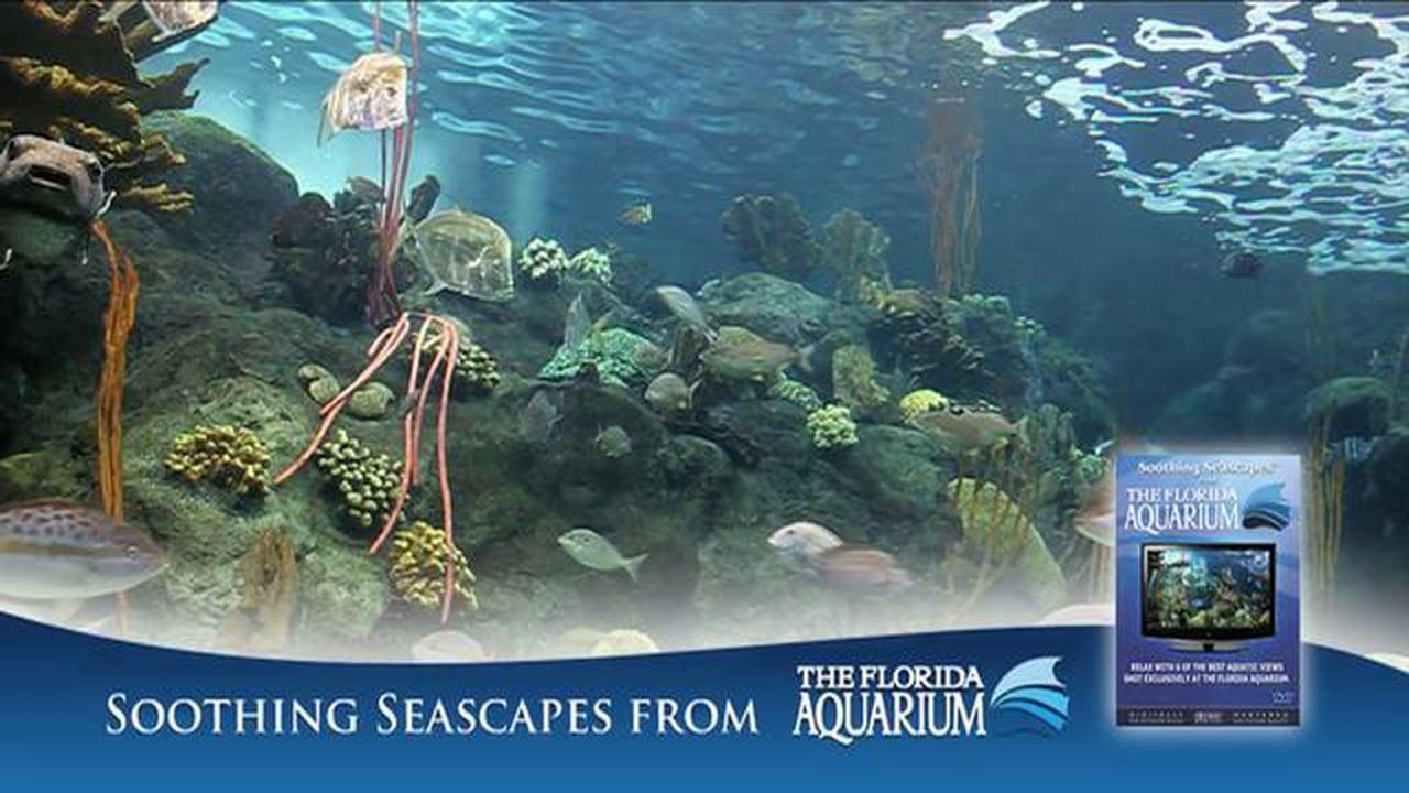 Aquarium DVD Volume 1